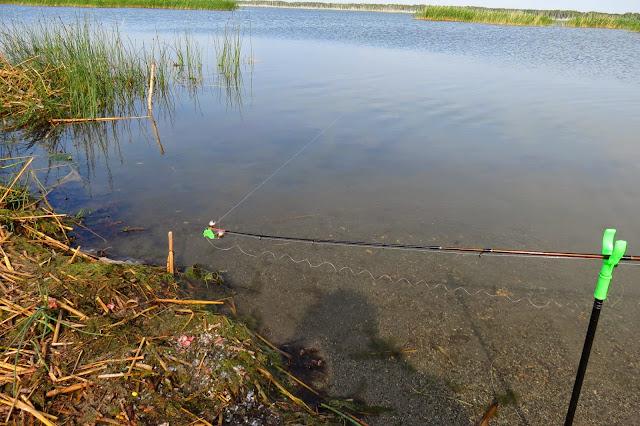 Колокольчик донки на озере Яу-Балык