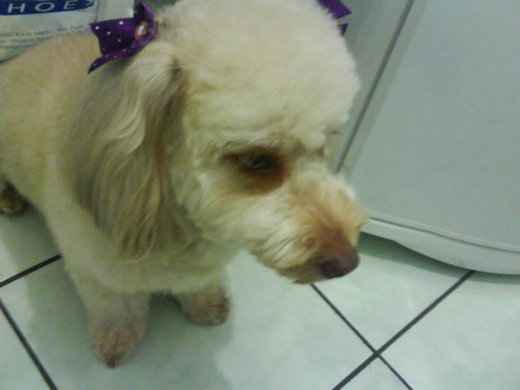 Mel minha cachorra linda!