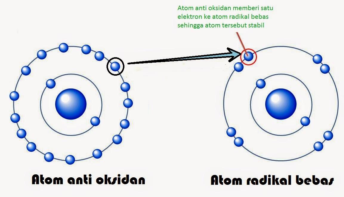 proses-netralisir-radikal-bebas-anti-oksidan