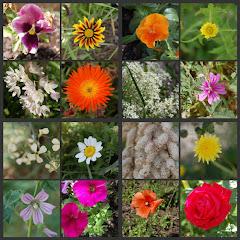 Collage de flors