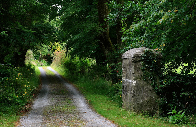 small road leading into the green forest in Connemara