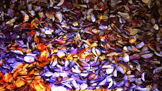 6 Arvore_despida_ sobre texturas de folhas_Reflexão_255