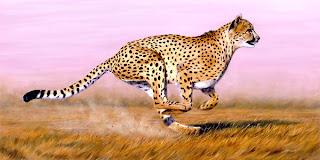 الحيوان الوحيد  الذى يسبق الفهد على الارض
