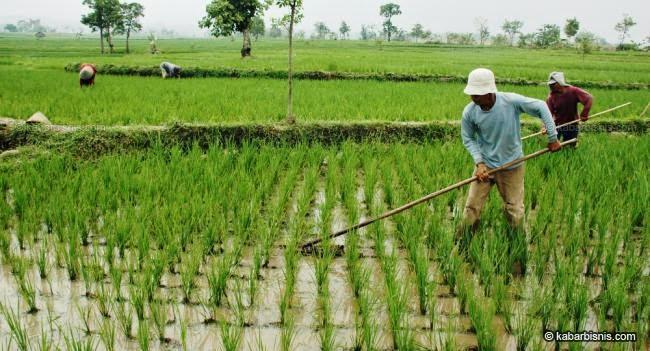 Lahan Pertanian Indonesia Dari Waktu Ke Waktu Blognya Kadir Ruslan