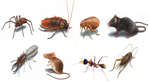Image result for Pest in house