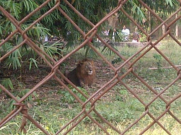 lion escape owerri imo state