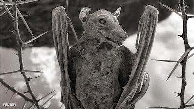 بالصور ... بحيرة قاتلة تحول الكائنات الحية لتماثيل حجرية !!!!