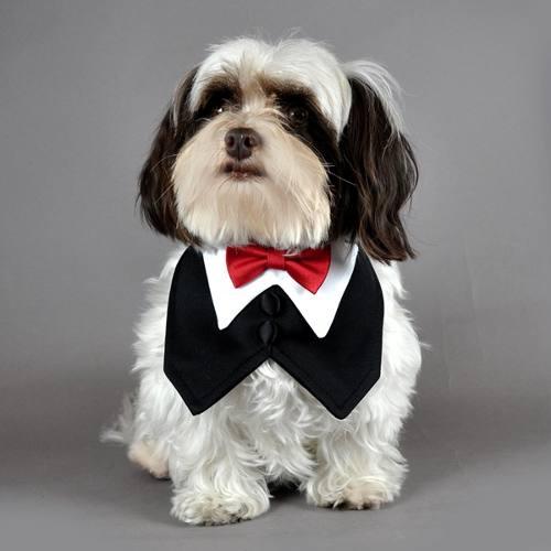 puppies  Dicas de Como Vestir Seu Cão