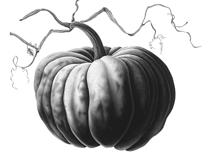 A PUMPKIN | Drawing with Hohman