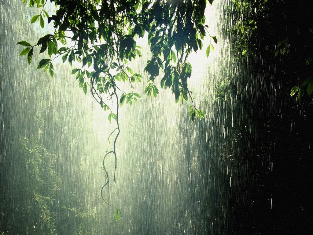 http://4.bp.blogspot.com/-WvHv5ktu7jE/TiQGo9RV3oI/AAAAAAAAB9w/yF7zEo_vAQw/s1600/Rain+wallpapers++3.jpg