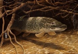 Рыбалка на щук со спиннингом
