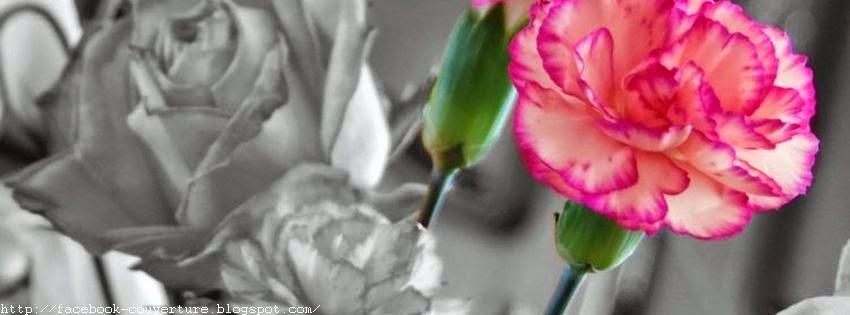Jolie couverture pour facebook fleur
