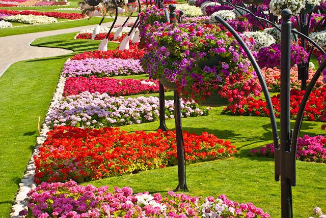 من اجمل حدائق العالم : حديقة العين بارادايس من الإمارات العربية DSC_6840.jpg
