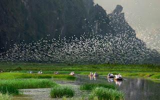 bird-Ninh Binh