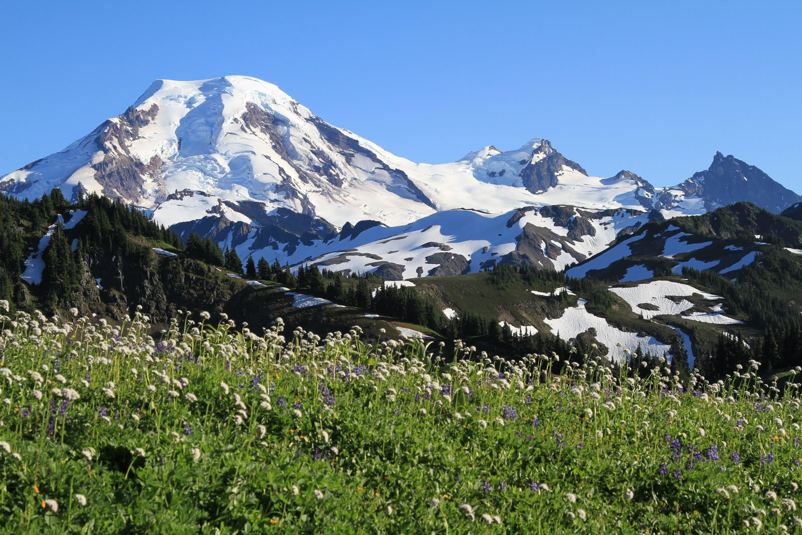 Mountain meadow flowers hot girls wallpaper for Chair 6 mt baker