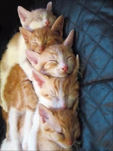 несколько рыжих котов, которые спят друг на друге