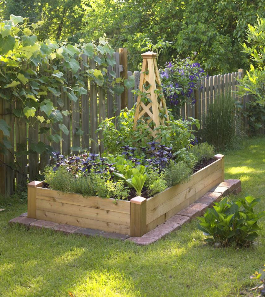 Creating our first vegetable garden advice please for A small garden