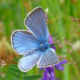 Fjärilar-Sländor i skog och mark