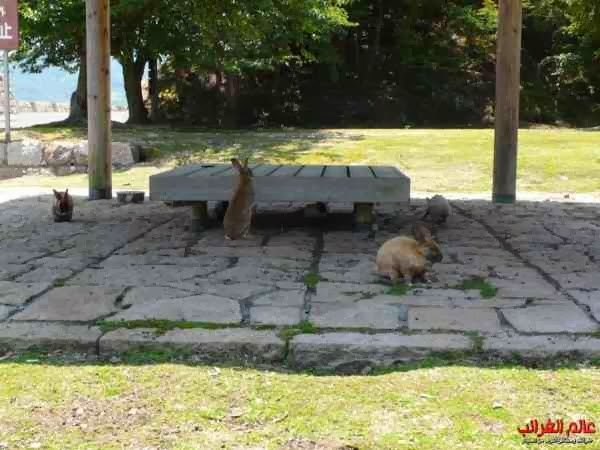 جزيرة الأرانب، اليابان، الغرائب، عالم غريب