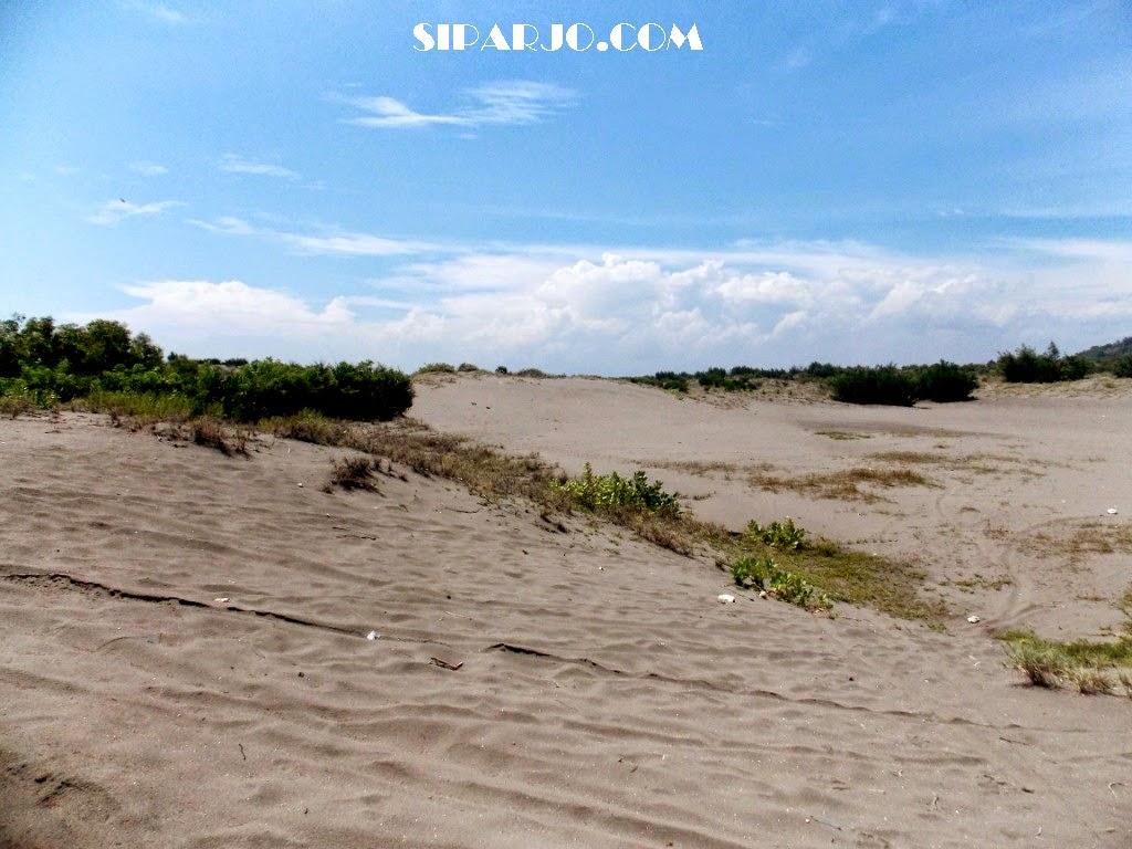 pemandangan gumuk pasir