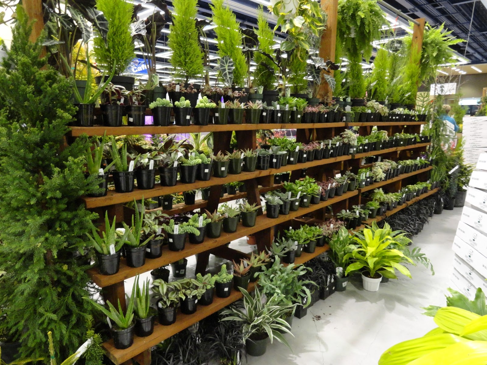 Nice And I Like Their Display Fixture, So Easy To See All The Plants!