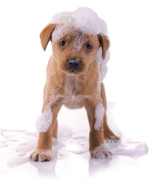 adoptar un cachorro cachorros en adopci n peluqueria