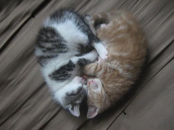 kittens heart shape, funny cats, cat photos, cat pictures