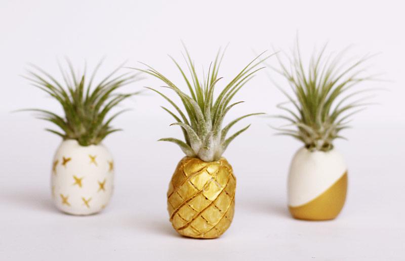 Planta aérea em vasinho-abacaxi