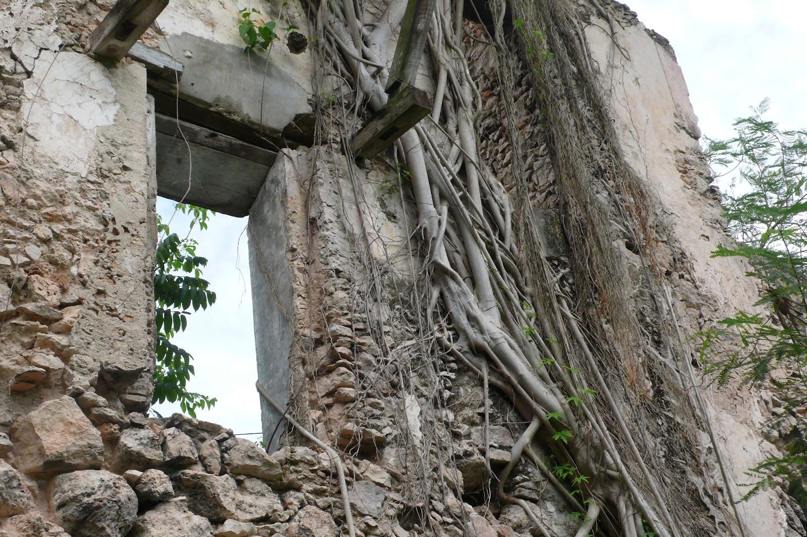 Foto Akar Pohon Menembus Dinding Beton 18