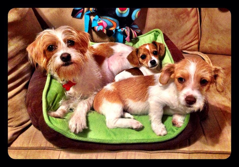 Adoptions Dogs Small