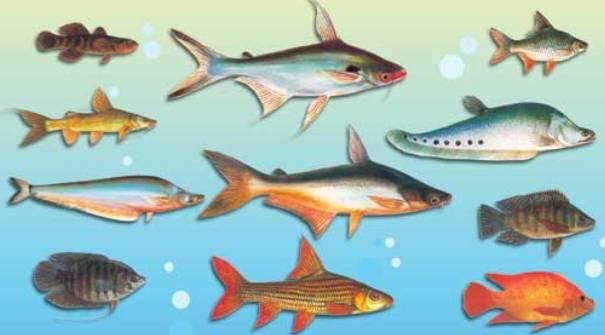 Especies de peces de mar imagui for Variedad de peces