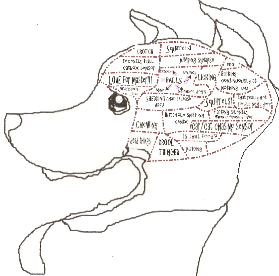 Diagram Of A Dogs Brain - Online Schematic Diagram •