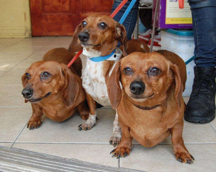 Sean Casey Dog Rescue