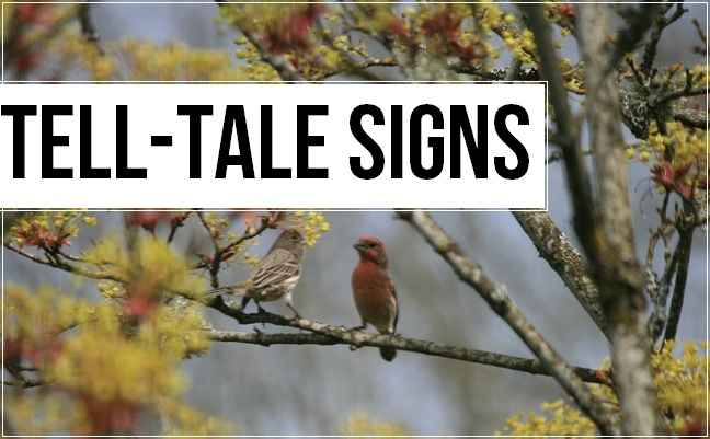 tell-tale signs