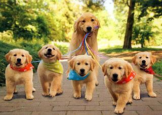 mamá perra con sus cachorros