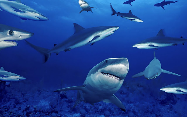Wallpaper of a group of dangerous sharks