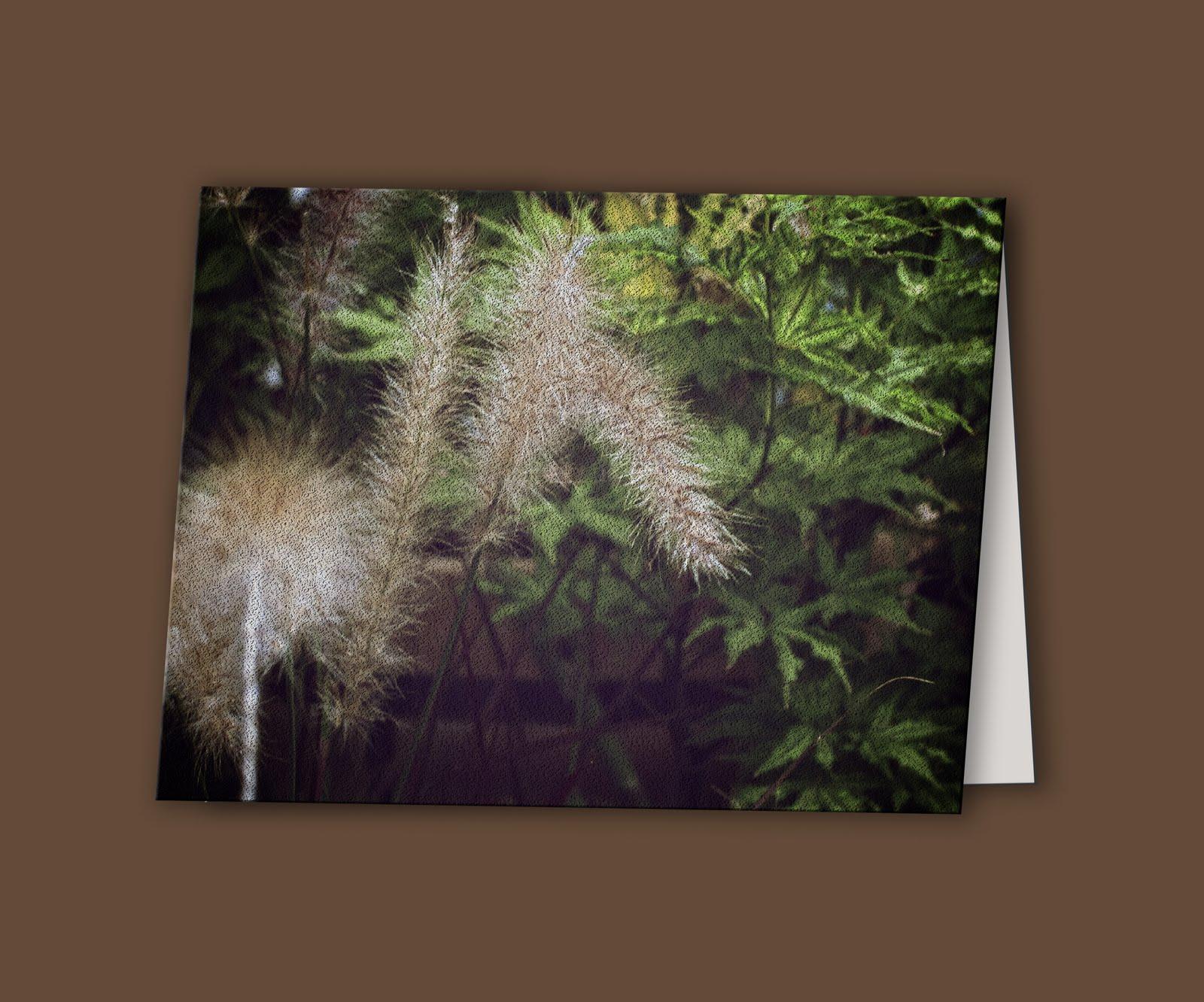 http://4.bp.blogspot.com/-WzZqI-YMi_g/TaMEWoRyhgI/AAAAAAAABeo/wYWYxCuAMBg/s1600/fountain+grass+card.jpg
