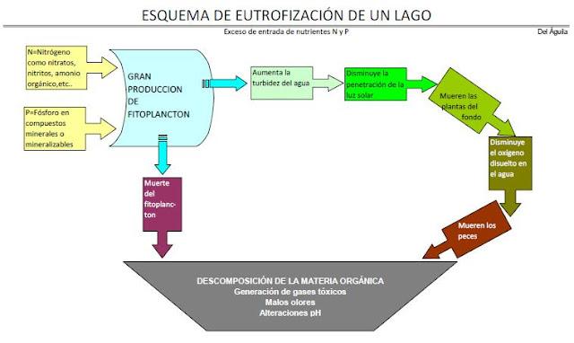 Esquema eutrofización lago
