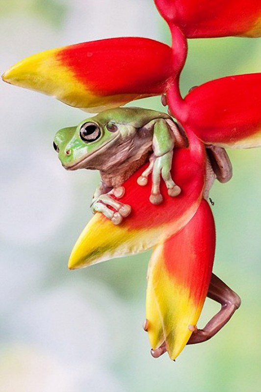 A Look of The Frog Princess…