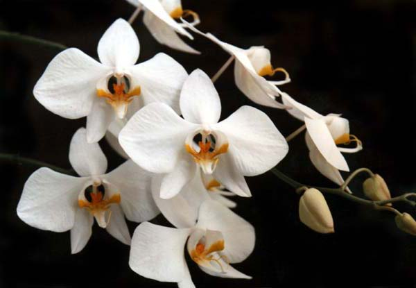 Bunga Hias Cantik