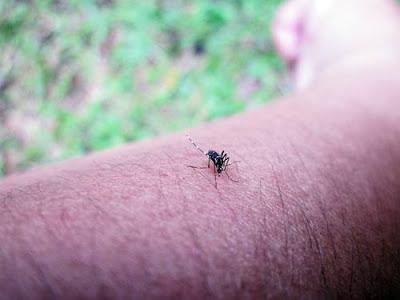 Nyamuk - Digigit serangga ketika di kebun itu biasa!