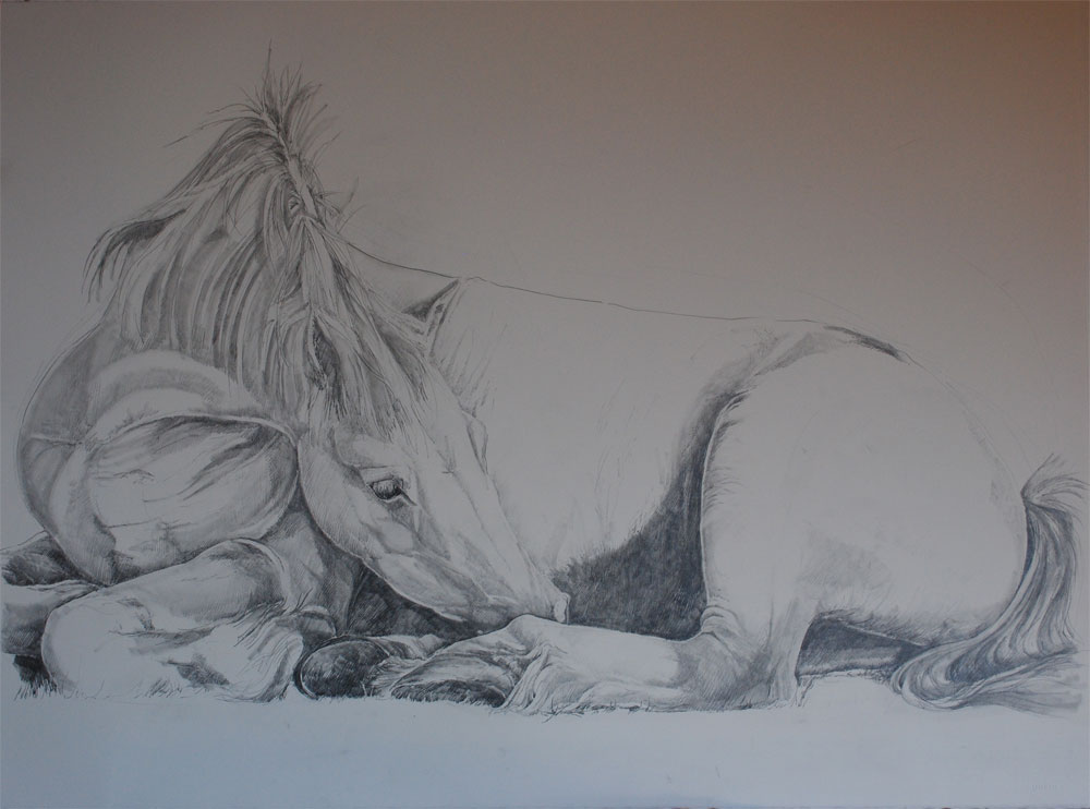 Horse Sitting Drawing Finish Horse 2 Draw Out
