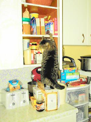 Cat opens door to cupboard