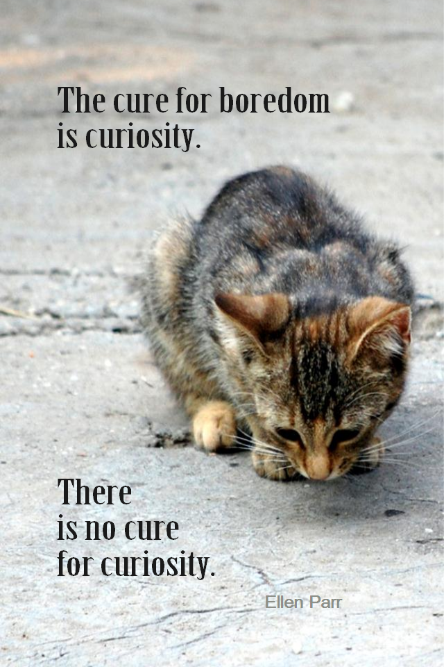 visual quote - image quotation for ENTHUSIASM - The cure for boredom is curiosity. There is no cure for curiosity. - Ellen Parr
