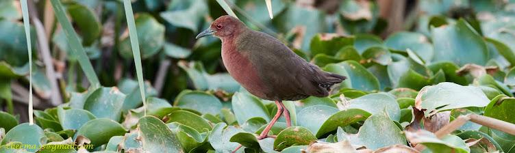 Birders Blog...
