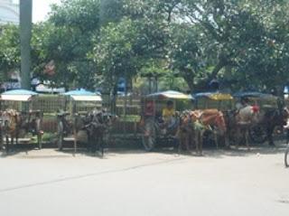 Komunitas Delman di Kab.Sumedang Hampir Punah