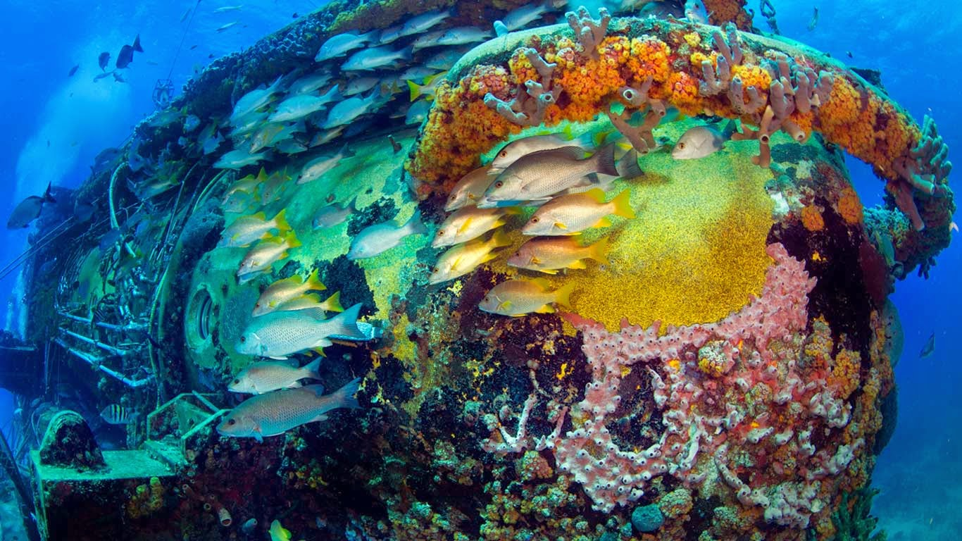 Schooling fish hide in the shelter of the Aquarius Reef Base in the Florida Keys National Marine Sanctuary (© Stephen Frink/Corbis) 175