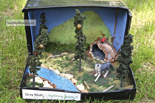 Gray Wolf Diorama