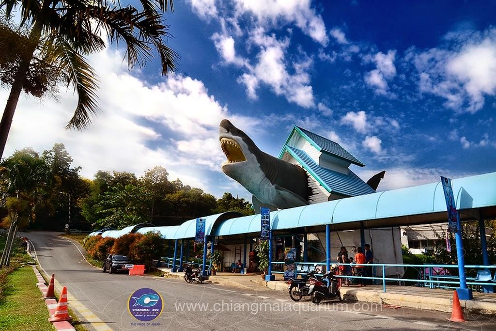 Thailand around the city: Chiangmai Zoo Aquarium
