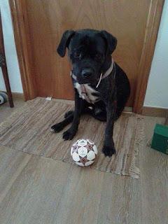 Χάθηκε σήμερα στην περιοχή της Περαίας Θεσσαλονίκης μαύρο σκυλάκι, ενός έτους